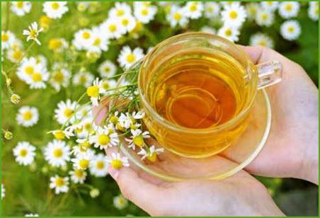 اضغط على الصورة لعرض أكبر.  الإسم:chamomile1.jpg مشاهدات:2755 الحجم:48.0 كيلوبايت الهوية:17347